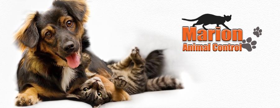Animal Shelter City Of Marion Police Dept